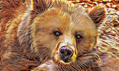 Litecoin [LTC] victim of bearish market: Lowest drop in 2018!