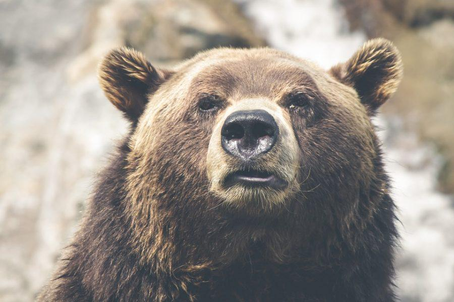 XRP and Tron [TRX] feel the brunt of the bear; development try to counteract effects