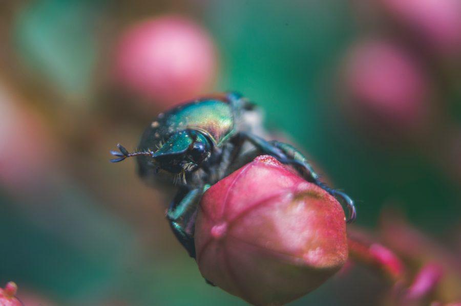 Monero [XMR] bugs explained by its lead developer, Riccardo Spagni