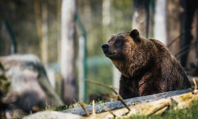 Tron [TRX/USD] Technical Analysis: Bear attack gets more intense as cryptocurrency continues its free fall