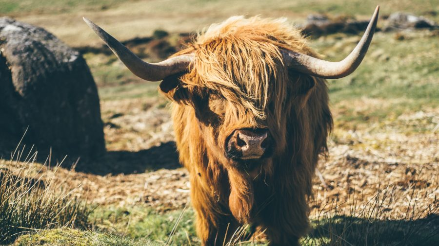 Ethereum [ETH/USD] Technical Analysis: Bulls siege bear's territory forcing them into hibernation