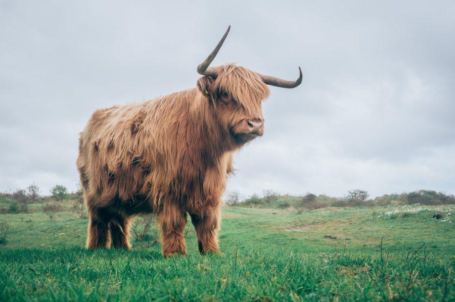Tron [TRX] Technical Analysis: Bulls takeover the bear's turf